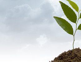 Desarrollo de instrumentos para el monitoreo ambiental y territorial en Uruguay