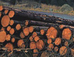 Observatorio de las actividades forestales y los proyectos de industrialización