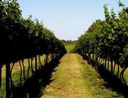 Evaluación ambiental de la producción agropecuaria de la zona Oeste de Montevideo